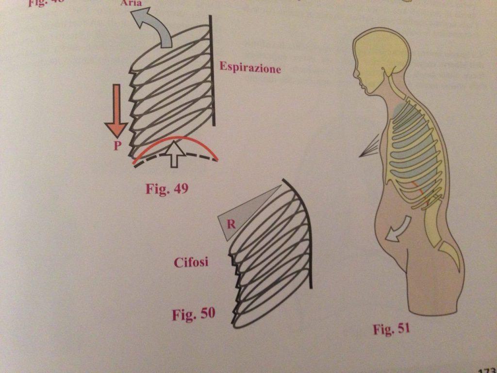 dorso curvo respirazione diaframma mal di schiena nadia forte schiena forte